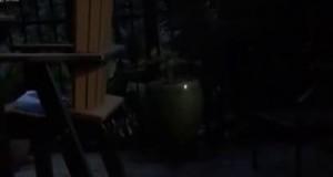 Żaba połknęła świetlika