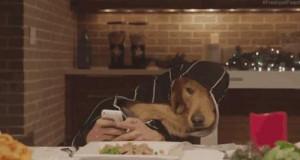 Rodzinny psi obiad
