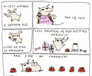 Historia o zwykłym psie