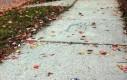 Street art ze ślimaczkiem