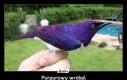 Purpurowy wróbel