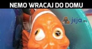 Nemo wracaj do domu