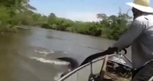 Ogromny wąż!