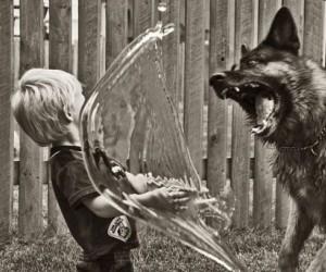 Prawda czy fałsz? - pies i woda