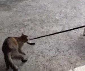 Pies, wracamy do domu!