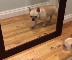 Kiedy widzę siebie codziennie rano w lustrze