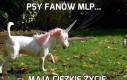 Psy fanów MLP...
