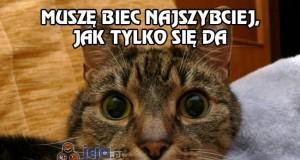 Właściciele kotów to zrozumieją