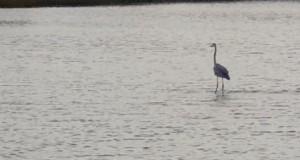 Patrzcie, chodzę po wodzie!