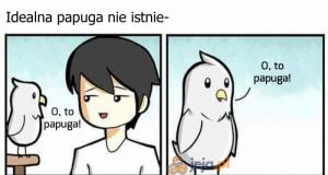 Idealna papuga