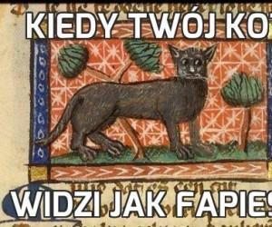 Kiedy twój kot