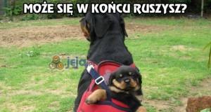 Prawdziwy psi powóz