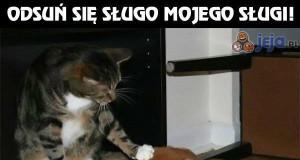 Apodyktyczny kot