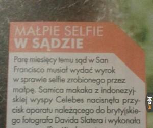 Nawet małpy już robią selfie