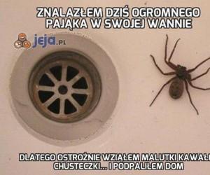 Znalazłem dziś ogromnego pająka w swojej wannie