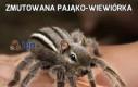 Zmutowana pająko-wiewiórka