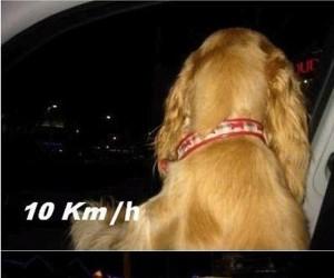Pies lubiący dużą prędkość