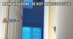 Mam wrażenie, że kot mnie szpieguje