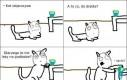 Koty są złośliwe