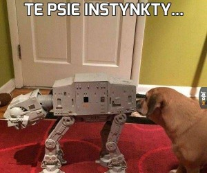 Te psie instynkty...