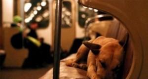 Z życia psów
