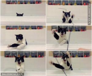 Kocie zabawy podczas kąpieli