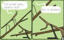Problemy patyczaków