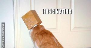 Gdyby koty były naukowcami... Nigdy nic by nie odkryto