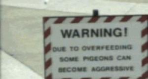 Nie dokarmiać gołębi!