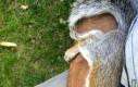 Gdy wiewiórka się w Tobie zakocha...