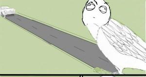 Dlaczego ptaki srają na ludzi?