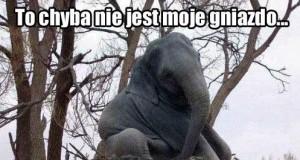 Opóźniony słoń