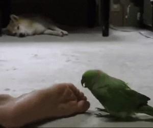 O żeż ty, ale stopa!