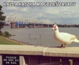 Każda kaczka ma gdzieś zasady