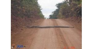Blokada drogi