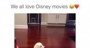 Wszyscy kochamy filmy Disneya