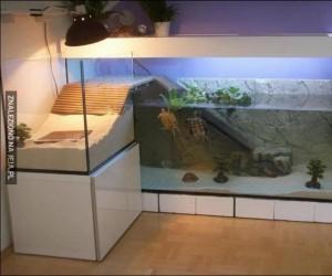 Te żółwie mają ładniejsze mieszkanie niż ja...