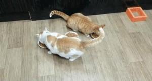 3 miski i 2 koty