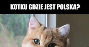 Patriotyczny koteł