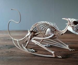 Szkielet wiwerny wydrukowany w 3D