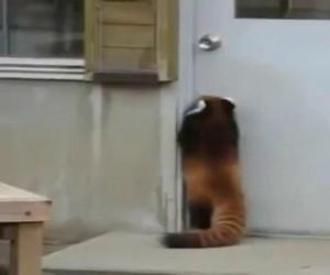 Jakiś dziwny kot nie może dosięgnąć klamki