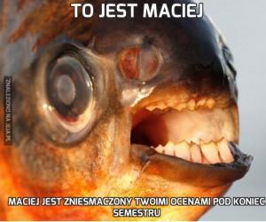 To jest Maciej