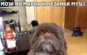 Przecież od razu widać, że to Chewbacca