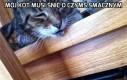 Mój kot musi śnić o czymś smacznym