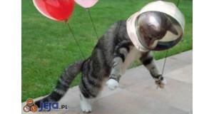 Kotek w kosmosie