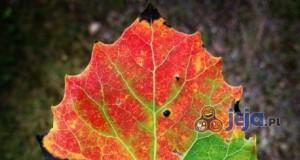 Jesień nadciąga!