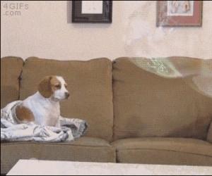 Ten pies jest martwy w środku
