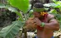 Tak mężczyźni obierają kokosy