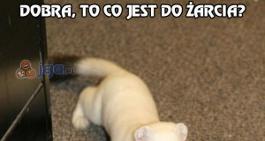 Czym jesteś i co zrobiłeś z moim kotem?
