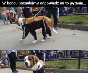 Gdyby psy nosiły spodnie...